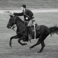 black horse bw