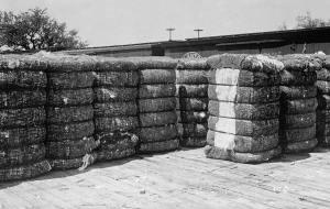 cotton-bales