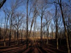 trees-at-bbb